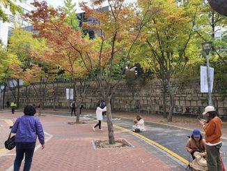 fall foliage Seoul 2019
